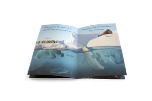 Let's Learn about Sea Creatures Big Book