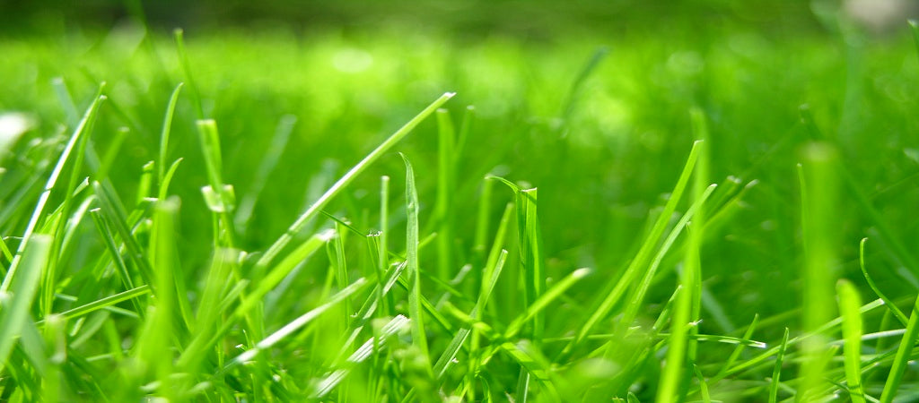 3 Causes Of Reflection In Grass Problems Turf Guard