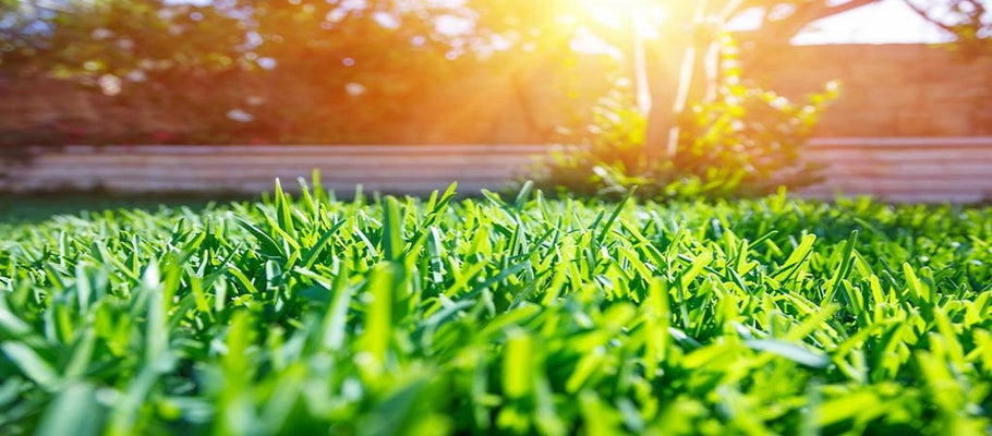 3 Discreet Ways to Stop the Sun's Reflection from Burning the Grass