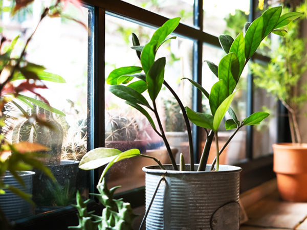 5 Useful Reminders For Plants Window Tinting In The Office