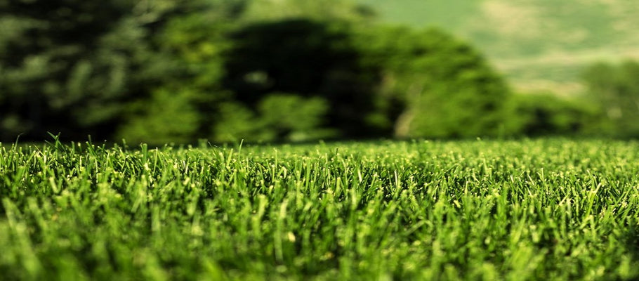 Do's and Don'ts When Having a Synthetic Turf