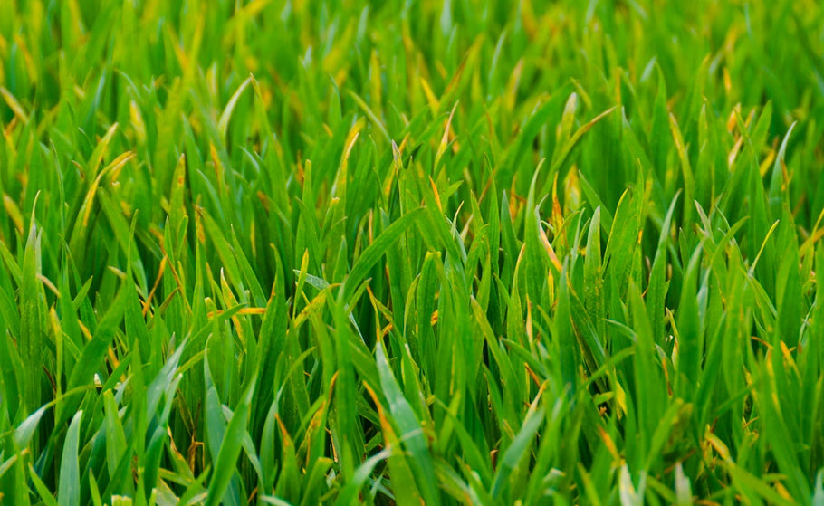 Effects of Reflection Problems to Natural Grass