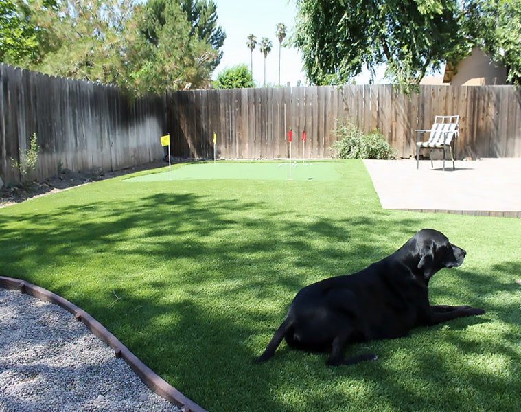 Everything You May Want to Know about Artificial Turf