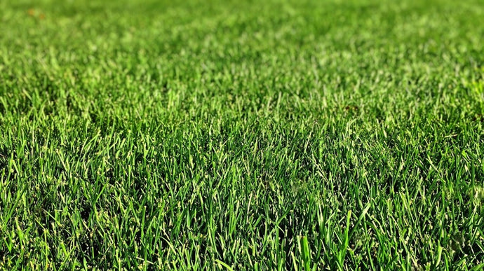 How to Install and Protect Your Lawn From Artificial Turf Melting