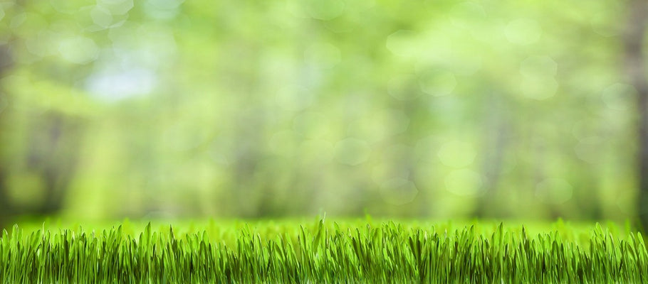 Melting Point of Artificial Grass: 4 Preparations You Should Make