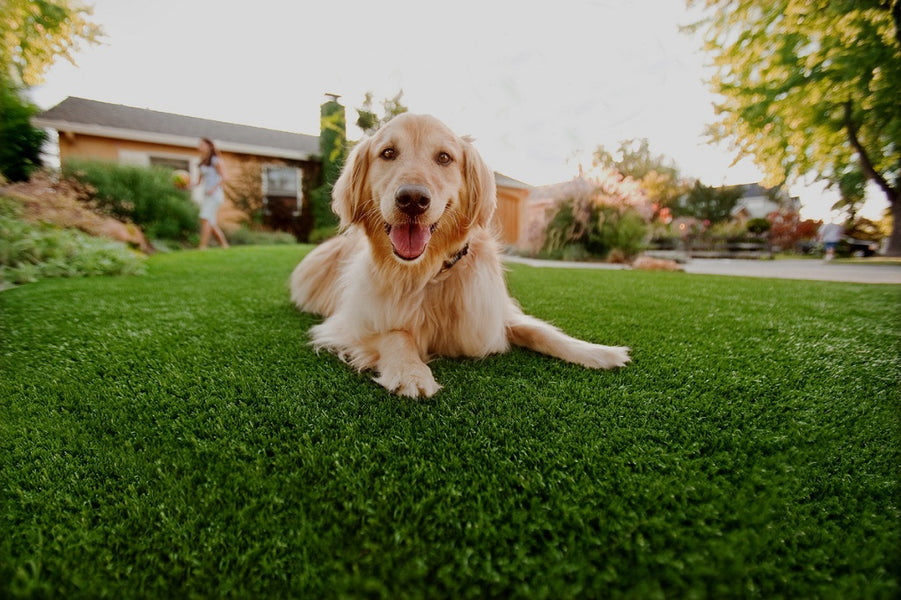 Pet-Proofing Your Residential Artificial Turf