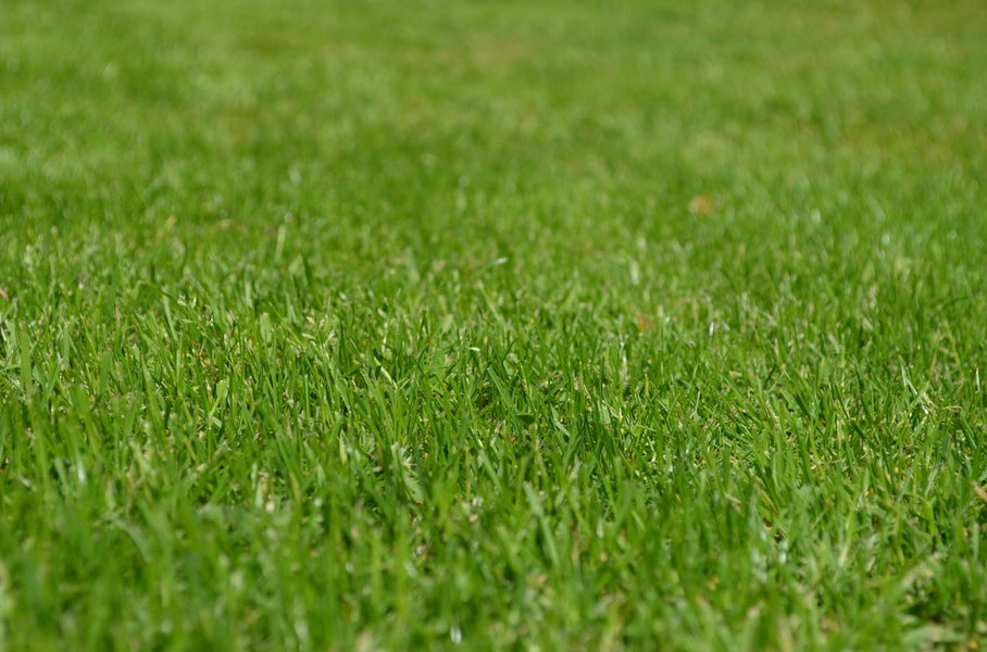 Problems of Artificial Turf Melting and How to Solve Them