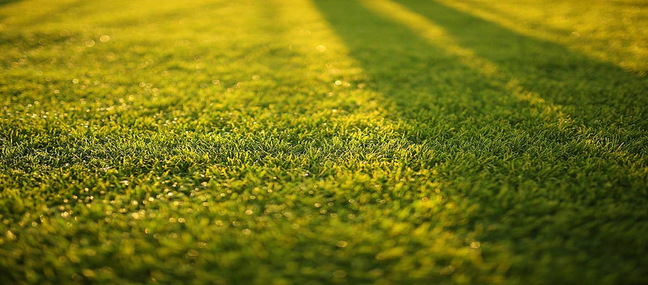 Stop Reflection Killing Grass: Ways to Fix the Problem