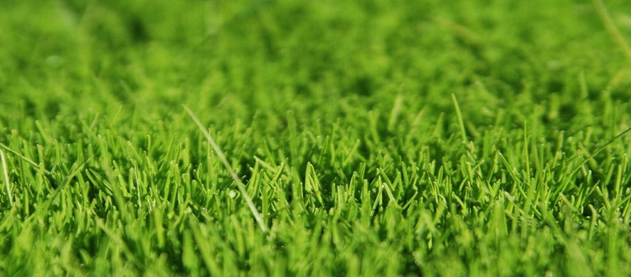 The Ability to Choose Right Turf: Considerations in Purchasing