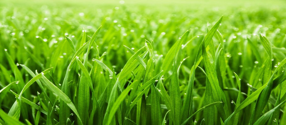 Use These Secret Ways to Stop Problem Reflection on Natural Grass