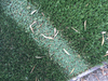 Here Is How to Prevent Windows from Melting Artificial Turf