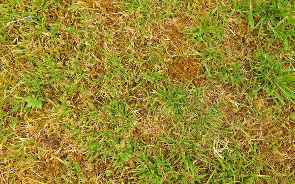 Prevent Your Grass From Burning