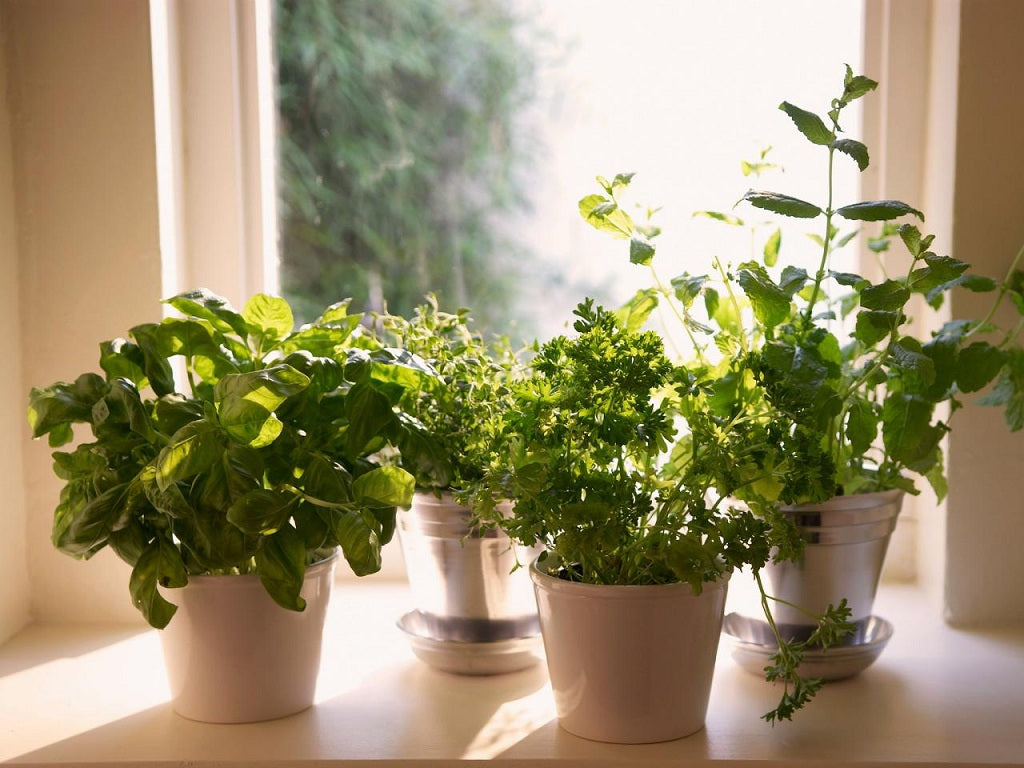 Ways to Fix It When a Window Reflection Kills Your Plants