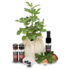 Outdoor Gourmet Plants & Herb gifts