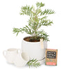 Outdoor Native Tree Gifts