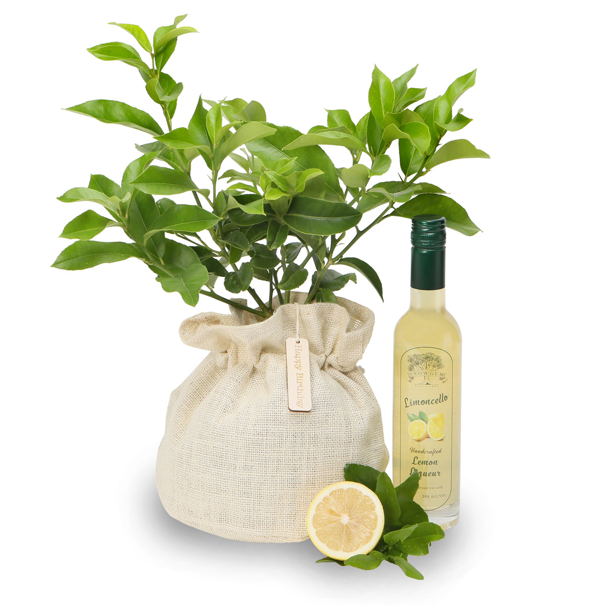luscious Limoncello lemon tree gift