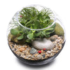 lucky money tree terrarium