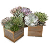 succulent square gift box