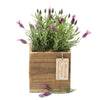 fragrant lavender square box
