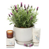 fragrant lavender orb hamper