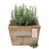 rosemary remembrance planter