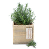 rosemary remembrance square box