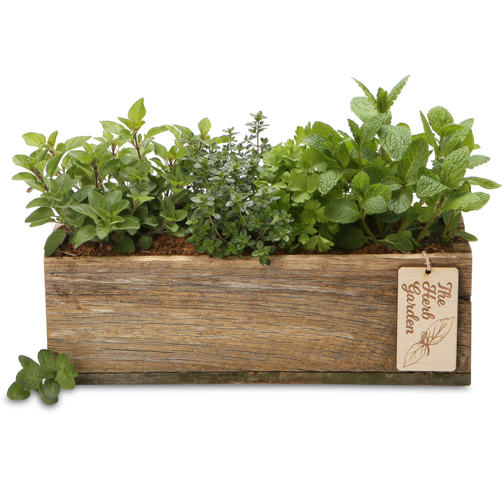 herb rectangle gift box