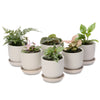 bulk woodlands dash pots (min 15 units)