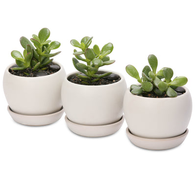 Jade lucky money tree belly bowls