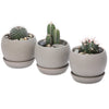 assorted cacti belly bowls