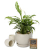indoor peace lily globe tea gift