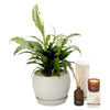 indoor peace lily globe fragrance gift