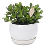 Jade Lucky Moneytree Buddha bowl