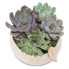 Small succulent rose bowl