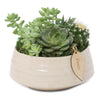 Small succulent zen bowl