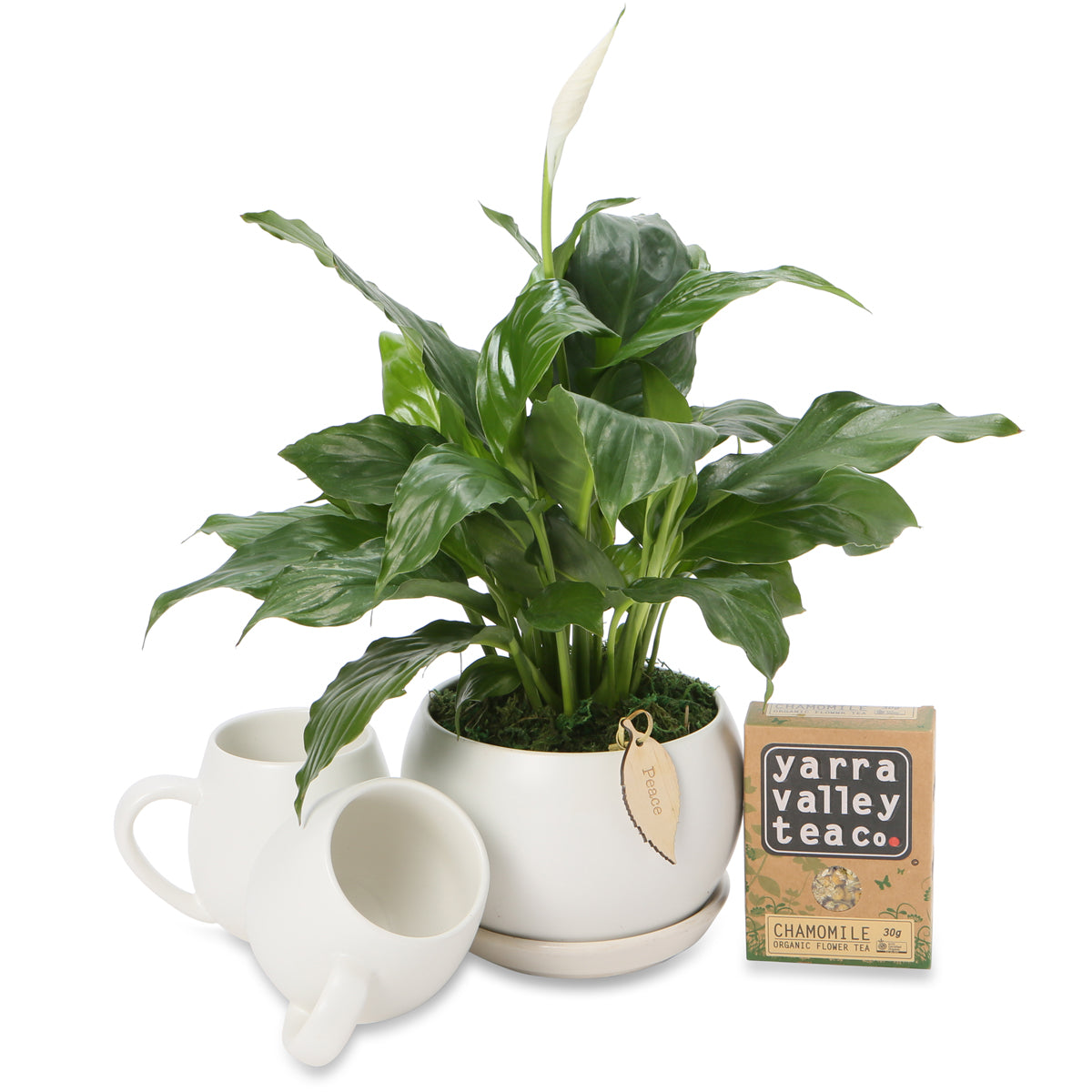 Small Peace Lily Tea Hamper