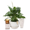 Small Peace Lily Fragrant Hamper