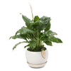 Small Peace Lily Buddha Bowl