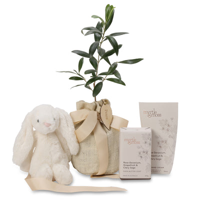 small olive tree baby hamper