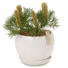 Banksia Birthday Candles orb bowl