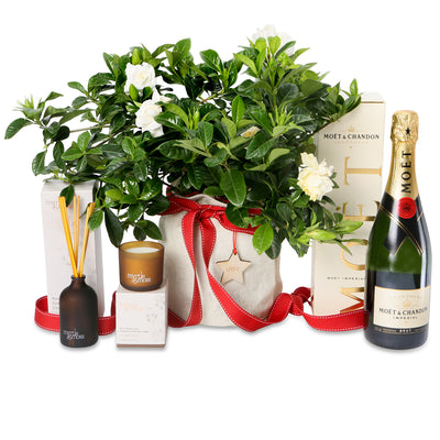 Christmas fragrant gardenia celebration hamper
