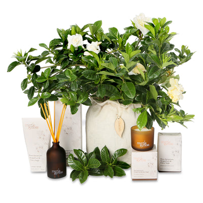 fragrant gardenia indulgent hamper