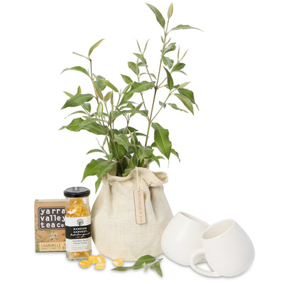 native tree tea gift hamper