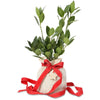bay laurel christmas gift tree
