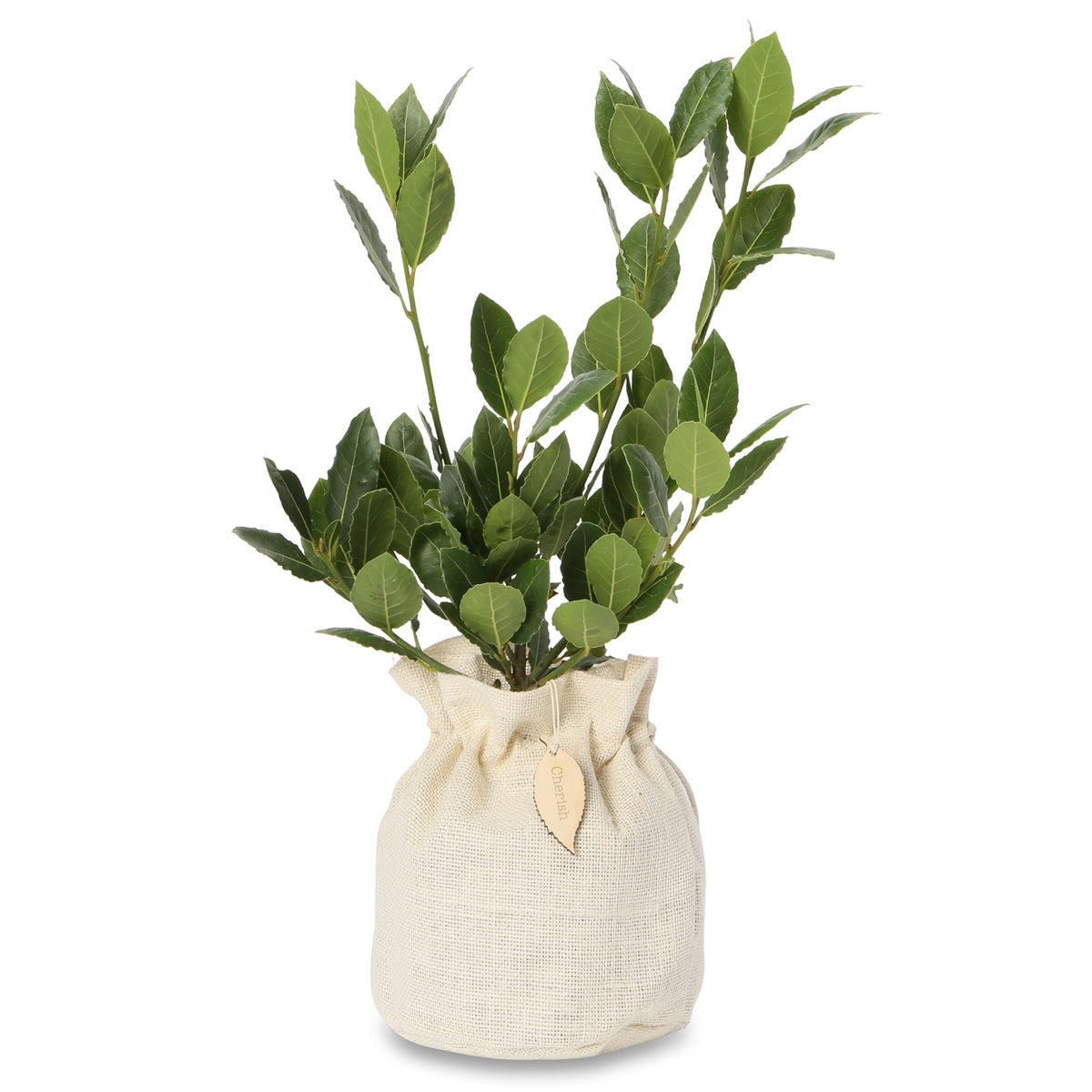 bay laurel gift tree