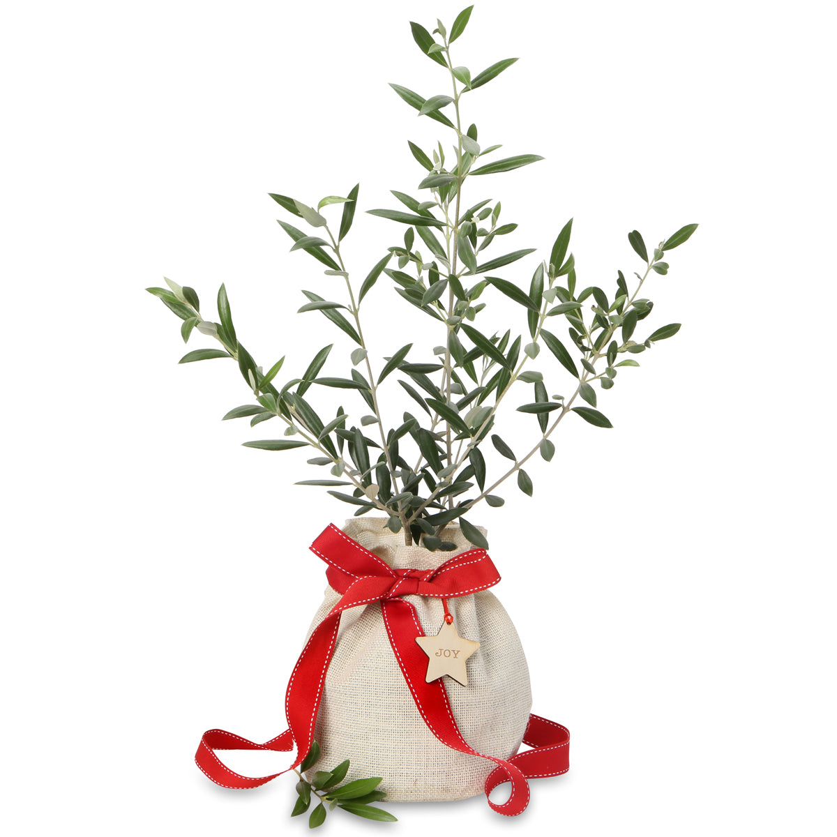 Christmas olive gift tree