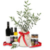 Christmas olive tree peace gift
