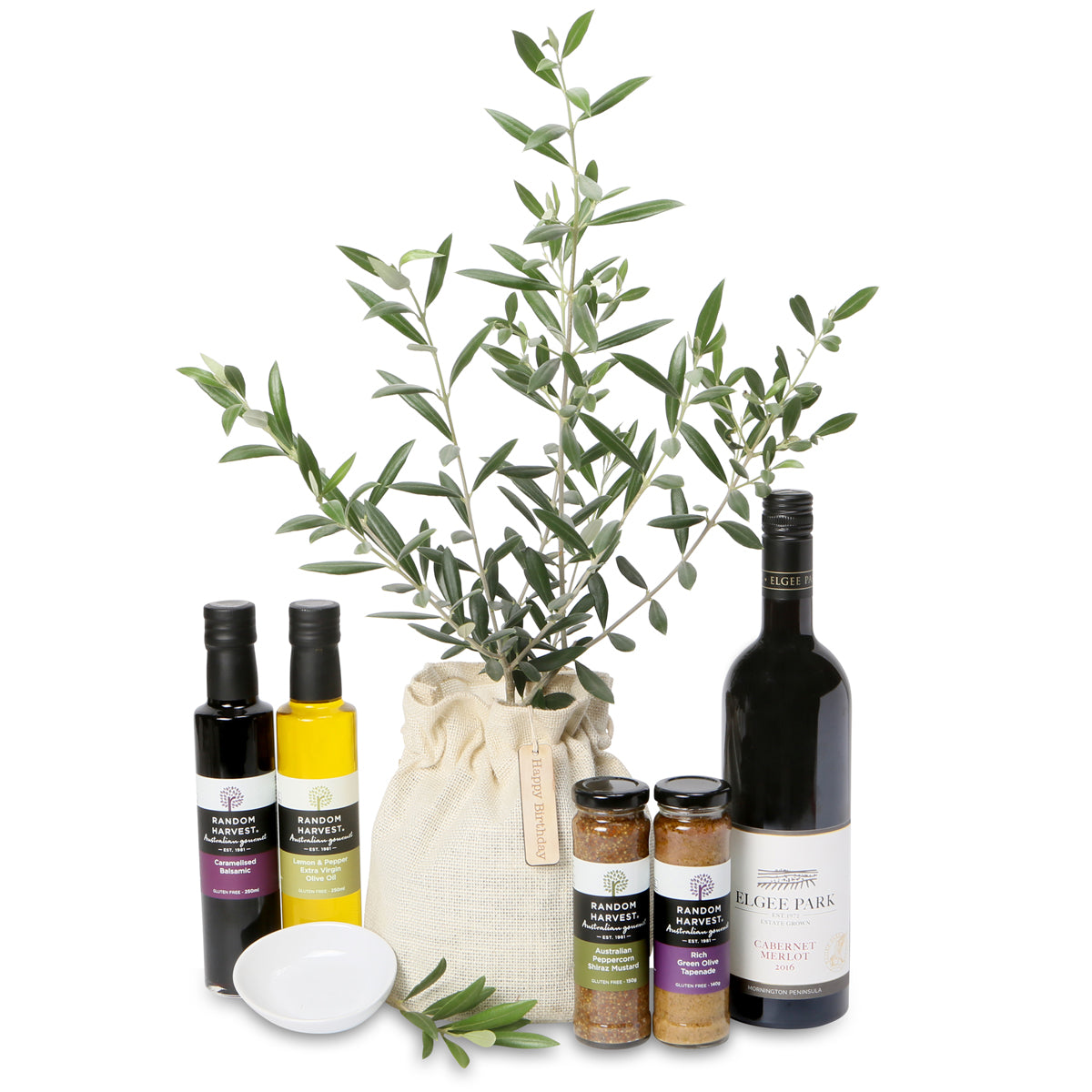 Large Olive Tree Peace Gift Growing Gifts