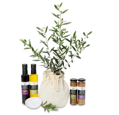 large olive tree peace gift