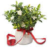 fragrant gardenia christmas gift